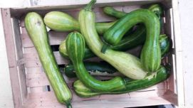 courgette_preview